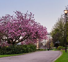 Weston Park in bloom by Jose Vazquez
