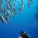 Scuba Diver shining torch by a  school of fishes by Sami Sarkis
