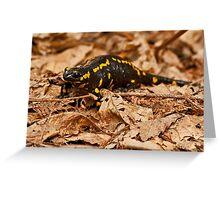 Fire Salamander (Salamandra salamandra) Greeting Card