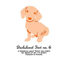 Dachshund Fact no. 6 Photographic Print