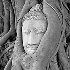 Ayutthaya Buddha's Head by Fern Blacker