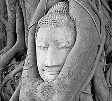 Ayutthaya Buddha's Head by fernblacker