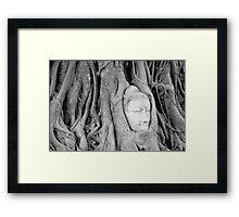 Buddha's Head in Bodhi Tree Framed Print
