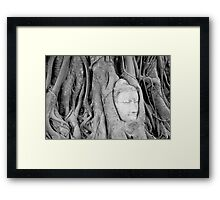 Buddha's Head in Bodhi Tree Framed Print