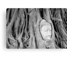 Buddha's Head in Bodhi Tree Canvas Print