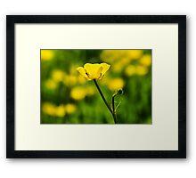 Buttercups  Framed Print