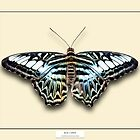 Blue Clipper Butterfly - Specimen style print by Mark Podger