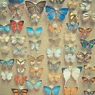 The Butterfly Collection by Cassia