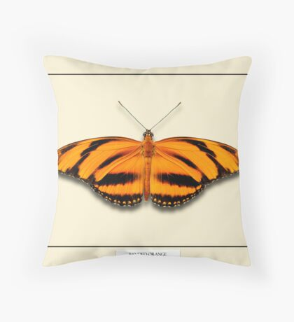 Banded Orange Butterfly - Specimen style print Throw Pillow