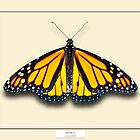 Monarch Butterfly - Specimen style print by Mark Podger