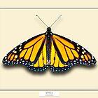 Monarch Butterfly - Specimen style print by Mark Podger