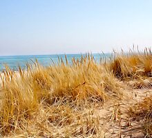 Lake Michigan Sand Dune Grasses by elizdesigns