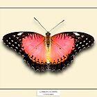 Common Lacewing Butterfly - Specimen style print by Mark Podger