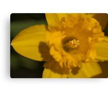Bright Yellow Daffodil Canvas Print