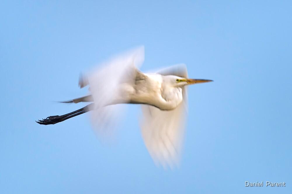 Egret blur  by Daniel  Parent
