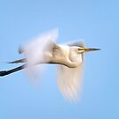 Egret blur  by Daniel  Parent
