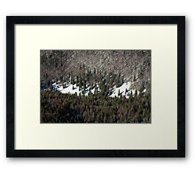 The winter forest Framed Print