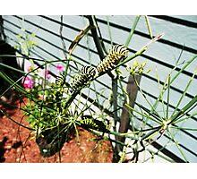 Hungry Caterpillars Photographic Print