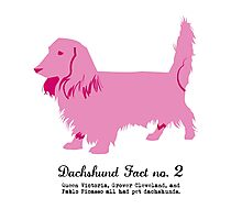 Dachshund Fact no. 2  Photographic Print