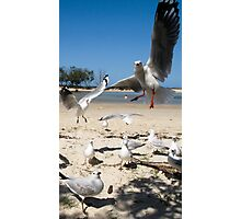 fighting for food Photographic Print