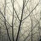 the fog by Ingrid Beddoes