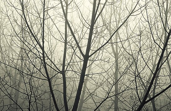 the fog by Ingz