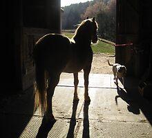 Shadow Pony and Friend by ceWOLFE