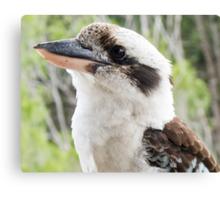 kookaburra looking Canvas Print
