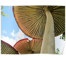 toadstools in fairyland Poster