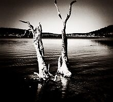 Gnarly trees, Woy Woy, NSW by Mamafro