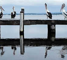 four pelicans on the jetty by Anne Scantlebury