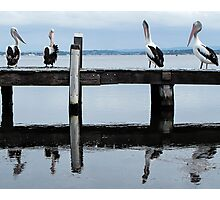 four pelicans on the jetty Photographic Print