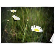 Trois fleurs aimes le soleil Poster