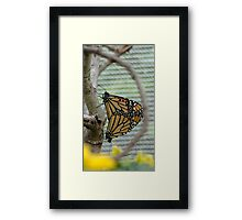 Nature in Repose Framed Print