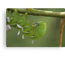 Caterpillar with Attachments  Canvas Print