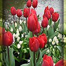 Velvety Red Tulips and White Muscari - Keukenhof Gardens by Kathryn Jones