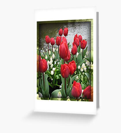 Velvety Red Tulips and White Muscari - Keukenhof Gardens Greeting Card