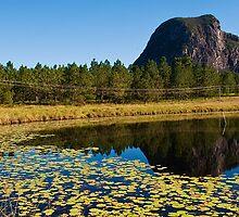 Mt Tibrogargan Pond Reflection by Jaxybelle