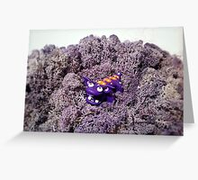 Knubbelding - Purplo Greeting Card