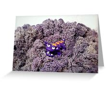 Knubbelding - Purplo Greeting Card