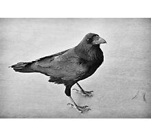 Raven Photographic Print