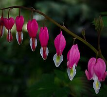 Bleeding Heart by Halobrianna