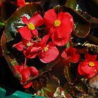 Sweet Spring by Gloria McAfee-Carver