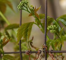 FENCED IN by Betsy  Seeton