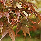 The Whisper of Leaves by Lynnette Peizer