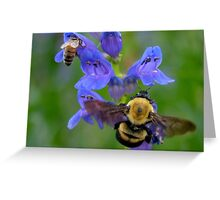 Bumble Bee and Honey Bee Greeting Card