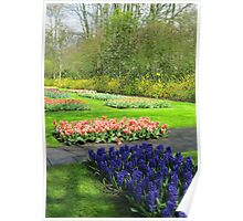 Colourful Beds of Hyacinths and Tulips - Keukenhof Gardens Poster