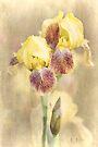 Iris Cream by KBritt