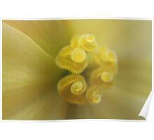Begonia Macro Poster