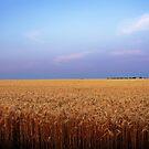 Heartland by Lisa Holmgreen